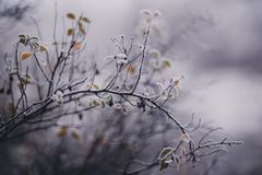 Tilt Shift Focus Photography of White Petaled Flower Royalty Free Stock Images