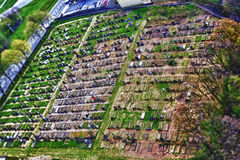 Tilt and shift grave yard Royalty Free Stock Images