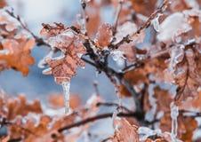 Tilt Shift Lens of Brown Leaves stock image
