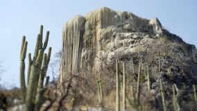 Mexico Hierve el Agua. Tilt shift lens panoram with big calcium stalagmite and cactus, Mexico Hierve el Agua stock video footage