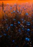 Tilt Shift Lens Photo of Blue Flowers stock photos