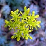 Tilt Shift Lens Photography of Green Flower Royalty Free Stock Photos