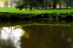 Tilt-shift park creek closeup and shore with grass Royalty Free Stock Photography