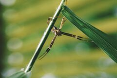 Tilt Shift Photo of Yellow Garden Spider Stock Images