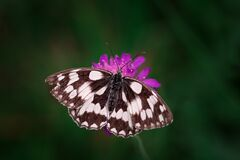 Tilt Shift Photography of Black and White Butterfly Royalty Free Stock Images