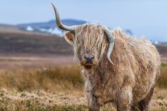 Tilt Shift Photography of Brown With Horns 4 Legged Animal at Daytime Royalty Free Stock Photo