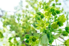 Tilt Shift Photography of Green Flowers Royalty Free Stock Photo