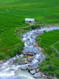 Tilt Shift Of a Rice Farm Royalty Free Stock Image