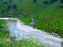 Tilt Shift Of a Rice Farm Royalty Free Stock Photos
