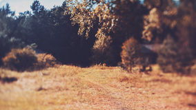Tilt-shift view of path through the meadow Royalty Free Stock Image