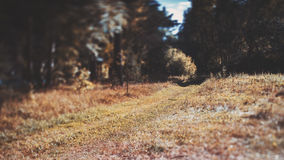 Tilt-shift view of path through the meadow Royalty Free Stock Photography