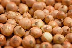 Tilt-shifted onions Royalty Free Stock Image