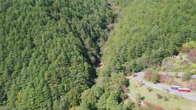 Tilt up aerial drone view of coniferous pine forest in early autumn in Taiwan. Tilt up aerial drone view of coniferous pine forest in early autumn season in stock video footage