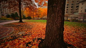 Tilt up from autumn leaves on city square ground stock footage