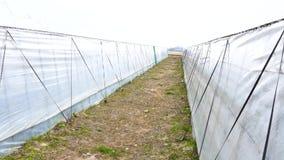 Tilt up between greenhouses. Environmental concept stock video