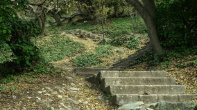 Tilt up shot of old man made stone stairs on mountain hill. Narrow path runs on hillside slopes to the sea shore through. Autumn forest. Stairs covered with stock video