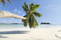 Tilted coconut palm tree. Palm trees overhang snow white tropical beach, Cote D'Or , Seychelles royalty free stock image