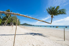 Tilted coconut tree landmark of Tao island in Thailand Stock Image