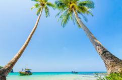 Tilted coconut trees by the beach with the boat and blue sky Royalty Free Stock Photos