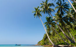 Tilted coconut trees by the beach with the boat and blue sky Royalty Free Stock Photography