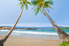 Tilted coconut trees by the beautiful beach near Song Cau Town Royalty Free Stock Images
