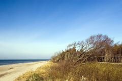 Tilted tree at beach. Empty beach, clear sky, beach, nobody in the photo, lots of copy space Royalty Free Stock Photo
