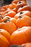 Tilted View of Pumpkin Display Royalty Free Stock Images
