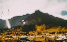 Tiltshift krajobraz z kwiatami i Altay górami Zdjęcie Royalty Free