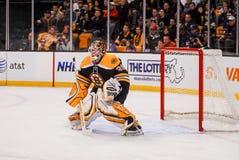 Tim Thomas Boston Bruins Royalty Free Stock Images