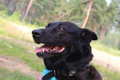 Tima nomeado cão Fotografia de Stock Royalty Free