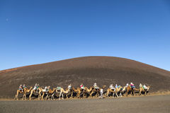 Tourists ride on camels being guided by local people stock images