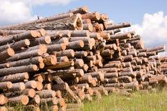 Timber. Many boles of timber on grass Royalty Free Stock Photo