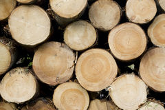Timber. Logged trunks of wood in a pile Stock Images