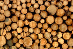 Timber. A shot of sunlit timber ready for processing royalty free stock photos