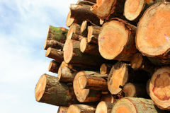 Timber. Cut logs stacked __ slight selective focu on forground logs Royalty Free Stock Photography
