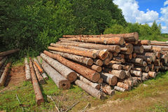 Timber Stock Photos