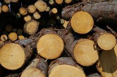 Timber. Log piles at a saw mill stock photos