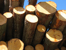 Free Timber Stock Photography - 3449962