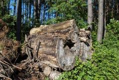 timber Images libres de droits