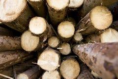 Timber. Freshly cut timber logs pilled up Stock Photos
