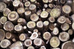 Timber. Several timbers royalty free stock photos