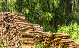 timber Photographie stock libre de droits