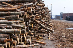 Timber. Masses of timber waiting to be shipped stock photography