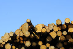 Timber Royalty Free Stock Images