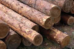 Timber. Set of fresh whole timbers, concept of deforestation Royalty Free Stock Photography