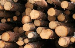 Timber. Stacked timber logs Stock Image