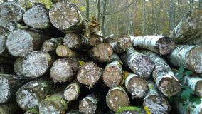 timber Photo stock