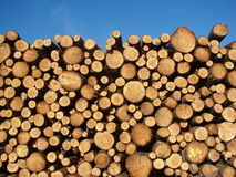 Timber. Fresh cut wood in a forest area Royalty Free Stock Image