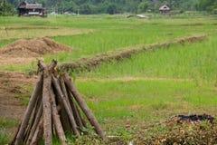 timber Photo stock