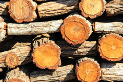 Timber background. Stack of timber royalty free stock images